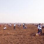Plantarea din Ţara lui Andrei