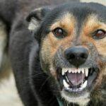 Scapă de frica de câini şi vei scăpa de orice frică!