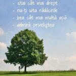 50 de sfaturi de la un copac